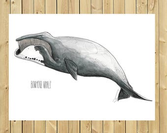 BOWHEAD whale illustration, A3, A4 or A5 watercolor sheet size