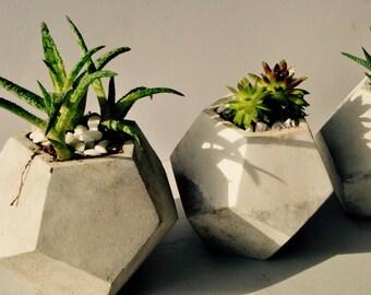 Concrete Geometric Planter - Dodecahedron