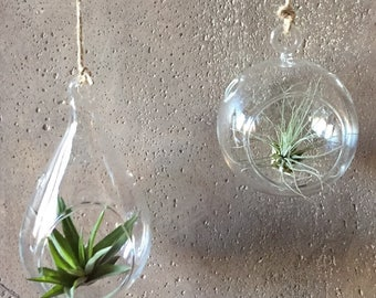 Hanging Air Plant Terrariums