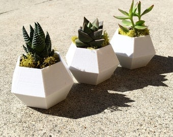 Geometric Planter (plant included)