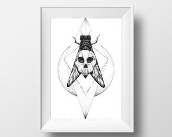Moth + Skull Ink Drawing, 6 x 8