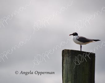 Seagull Stare // Photography // Birds // Instant Download
