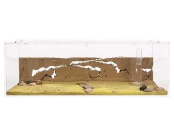 Sand Ant Farm BIG (Anthill, Formicarium, Educational, Ants)