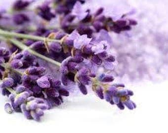 Biological Grain Lavender
