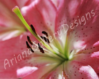 Macro Flower Canvas