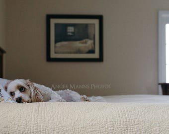 Dog Photograph, Master Bedroom Inspired Photo, Home Decor