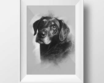 Dog Sketched Portrait - 11x14 Fine Art Print