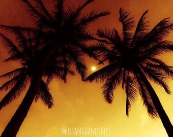 Hawaiian Palm Trees at Sunset
