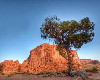 Monument Valley with uprooted Tree