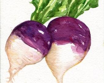 Turnips watercolor painting original, vegetable wall art, 5 x 7, turnip art, kitchen art decor, Modern minimalist, Sharon Foster Art