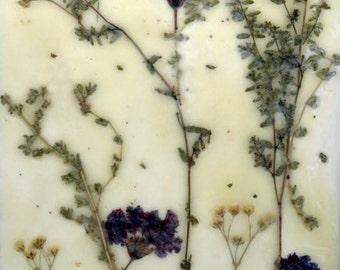 Dried flower art, pressed flowers, encaustic painting, wax art, small painting, pressed flower art
