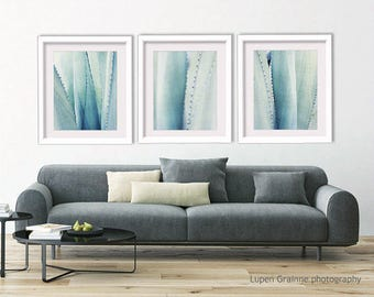"Pale blue wall art - botanical prints - minimal pale blue agave plant -  abstract nature photography 11x14 8x10 ""Agave Set of Three"""