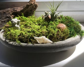 Moss Dish Garden Mini Concrete Planter with Lucky Cat and Air Plant