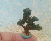 Miniature bonsai tree