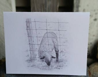 Artist drawn NOTECARDS  digital printed on quality cardstock package of 10 free shipping