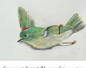 Original OOAK Watercolor and Gouache, Male Ruby Crowned Kinglet (2 days dead)