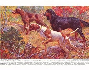 1930s English Short Haired Pointer Gordon Setter Dog Print - Vintage Antique Animal Pet House Home Decor Book Art Illustration for Framing