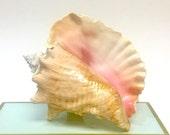 Beach Decor - Large Pink Conch Shell - seashells/sea shells/shell/shells/coastal style
