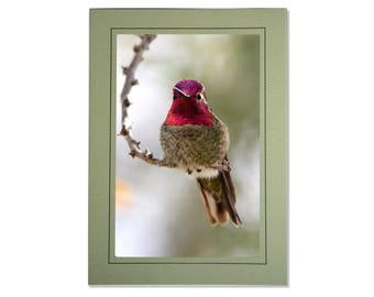 Hummingbird Cards - Anna's Hummingbird Card - Pink Green Gold Hummingbird - Handmade Hummingbird Cards - Custom Hummingbird Cards