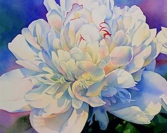White Queen Peony Art Print on Canvas