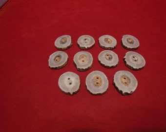 11 large Antler Buttons lot 156