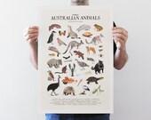 30 Australian Animals - Giclee Art Print (A4, A3, A2)