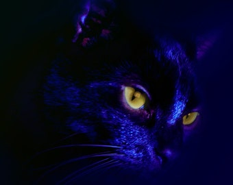Horror Print - Cat, Kitty, Blue, A3,Dark Print, Digital Art,Horror Art,Dark Art, Purr, Cat print, Dark blue cat, Witch, Evil cat, cats eyes