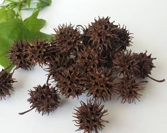 Seed Pods, Sweetgum Tree Seed Pods, Craft Supply, Natural Seed Pods