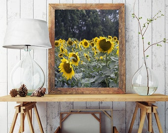 Sunflower Photography, Fine Art Print, Countryside Scene, Field of Sunflowers Print, Cottage Home Decor, Rustic