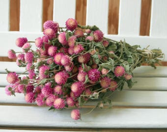 DRIED FLOWERS bi-colored Lovely Rose pink / cream color Globe Amaranth Flowers gomphrena flower bunch, Prim, Wedding, Shabby cottage floral