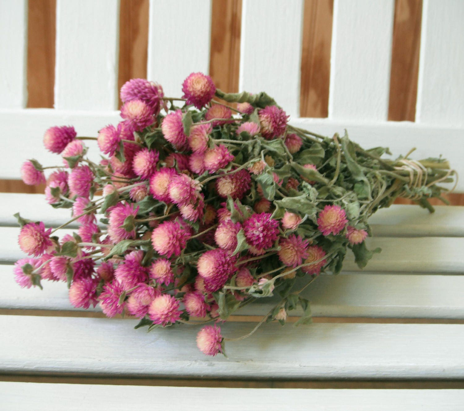 How to scrapbook dried flowers - Dried Flowers Bi Colored Lovely Rose Pink Cream Color Globe Amaranth Flowers Gomphrena Flower Bunch Prim Wedding Shabby Cottage Floral