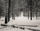 Big Deep path, 8x10 fine art black & white photograph, nature