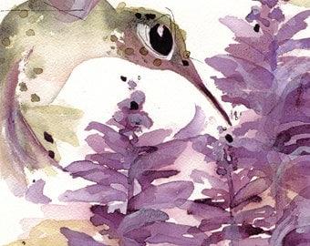 Large Hummingbird Art Print, Hummer in the Lavender, 12 x 16 Bird Art