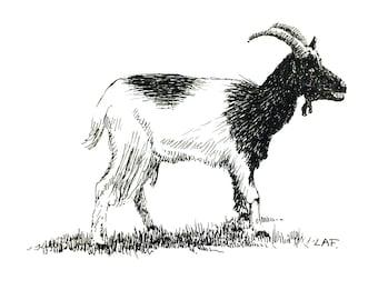 Goat Print, animal prints.goat drawing, goat art, domestic animals, pen and ink goat drawing, farm animal prints.farm animal art,pet art