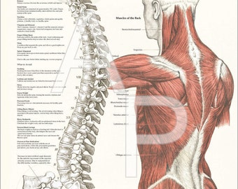 """Healthy Spine Strong Body Poster - 18"""" X 24"""""""