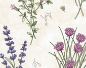 Thyme With Friends - Botanical Herbs Cream by Kris Lammers from Maywood Studio