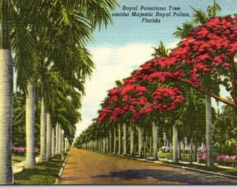 Florida, Royal Poinciana Tree, Royal Palms - Vintage Postcard - Postcard - Unused (T)