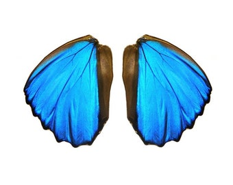 Real Blue Morpho butterfly wings for crafting and art projects