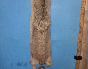 1 Tanned red Coyote Fur Pelt real animal skin taxidermy hide rug part