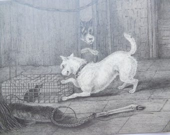 Antique Victorian original fine pencil drawing dogs dog playing with rat mouse illustration scene from scrap book
