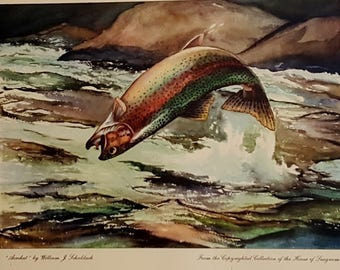 Vintage Fly Fishing Lithograph William J. Schaldach Rainbow Trout Print Fly Fishing Print  Titled Acrobat Stream Fishing Lithograph