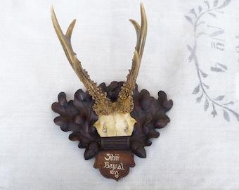 Vintage Deer Antlers 1919 Mounted Antlers Real Roe Deer Antlers