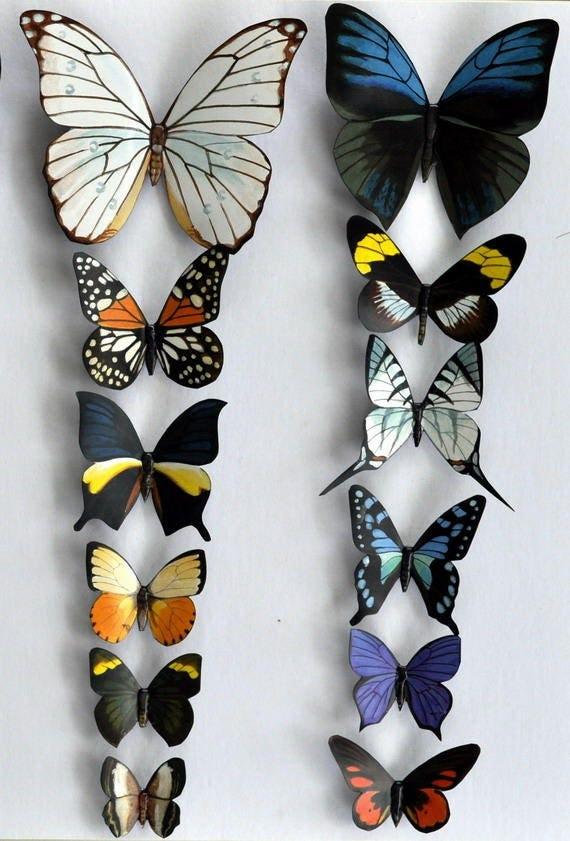 butterfly moth magnets rainforest butterflies set of 12
