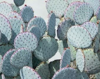 Paddle Cactus Photography, Green Wall Decor, Southwest Wall Art, Arizona Picture, Cactus Art Print, Botanical Artwork, Nature Photo