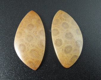 SALE Pair of Fossil coral cabochon , Earring set,  jewelry making supplies S7565