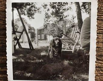 Original Vintage Photograph Sunny Spaniel