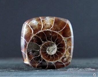 Beautiful Ammonite fossil cabochon b6809