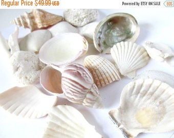 Unique Rare Shell Related Items Etsy