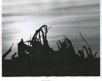 Tree branches in sunset vintage art photo P. Button