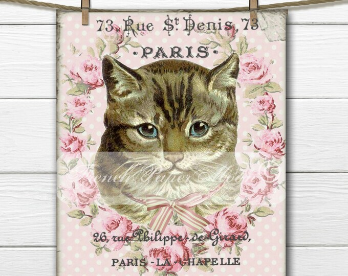 Shabby Chic Digital French Cat, French Graphic Cat, French Pillow Cat Transfer Image Digital Download